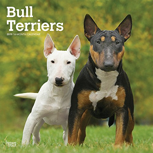 Bull Terriers 2019 12 x 12 Inch Monthly Square Wall Calendar, Animals Dog Breeds Terriers