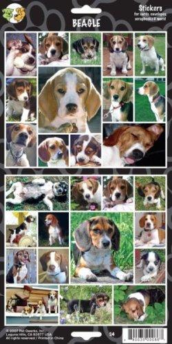 Pet Qwerks S4 Beagle Dog Sticker (Beagle Dog Sticker)