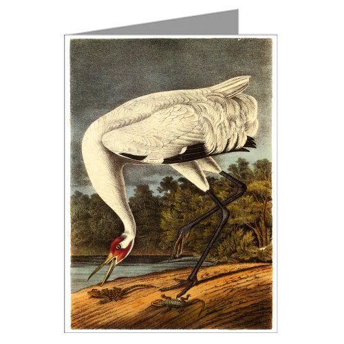 Single Greeting Card Of John James Audubon Celebrated Illustrations Of Audubon's Birds Of North America Featuring The Whooping ()