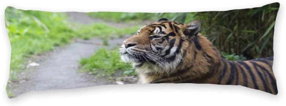 Black Tiger Body Pillow Covers Cases