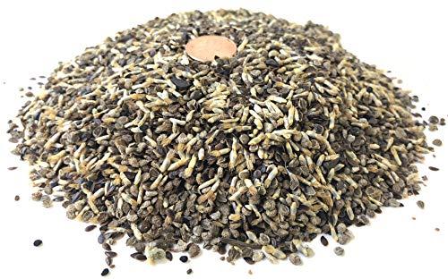 All Blues Wildflower Seeds - Bulk 1 Pound Bag - Over 120,000 Pure Live Seeds!