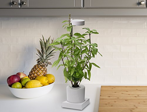 Leafy Desktop Hydroponics & Grow Light System (GL301W) (Holy Basil Plant With Pot)