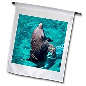 Danita Delimont - Dolphins - Mexico, Cozumel. Dolphin at Chankanaab Park - SA13 MDE0078 - Michael DeFreitas - 18 x 27 inch Garden Flag (fl_86731_2)