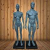 Male&Female Human Anatomy Figure Ecorche and Skin