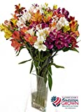 American Grown Alstroemeria - Fresh Cut Flowers - Single Bouquet - 25 Stems - Free Fast Shipping