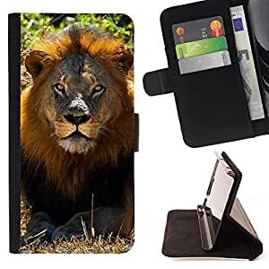 Momo Phone Case / Flip Funda de Cuero Case Cover - León Verano Mane ?frica Savannah Naturaleza - Apple Iphone 5C
