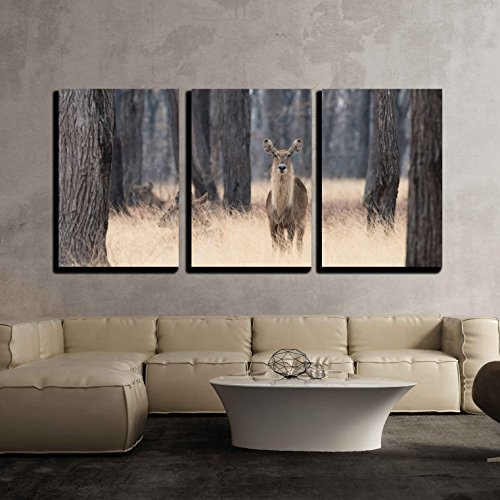 Antelope Framed (wall26 - 3 Piece Canvas Wall Art - Waterbuck (Kobus Ellipsiprymnus) Standing in Tall Grasses Amongst Trees - Modern Home Decor Stretched and Framed Ready to Hang - 16