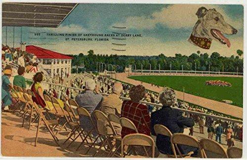 (Thrilling Finish Greyhound Racing at Derby Lane - St. Petersburg Florida (Vintage Linen Postcard) #985)