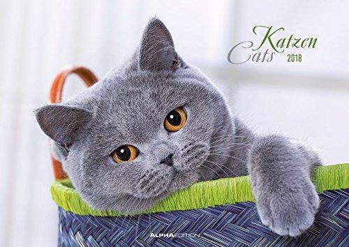 Katzen 2018 - Cats - Bildkalender (42 x 60 geöffnet) - Tierkalender