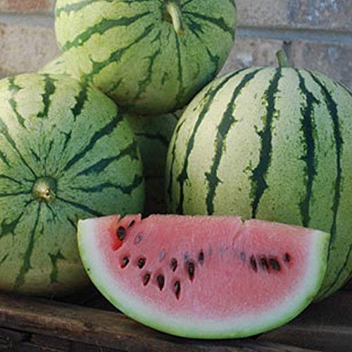 'Dixie Queen' Watermelon -Averages 30-40 pounds each! Matures early! (50 - Seeds)