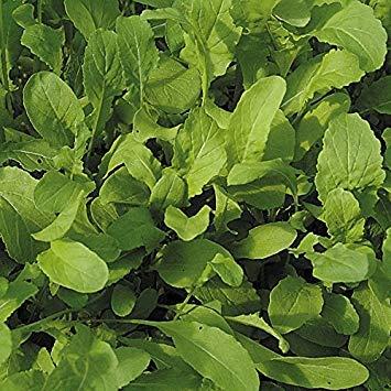 (Salad Leaf - Rocket - 1000 Seeds)