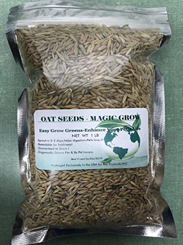 Oat Grass Seeds 1 Lb (3000+ Seeds)- Organic Cat,Dog,Pets Oat Grass (Oat Seed)
