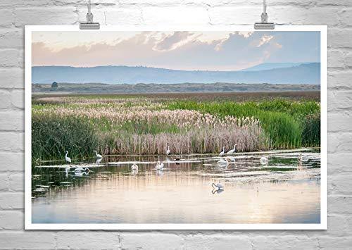 Wetlands Bird Art Print, Egrets and Pelicans Photograph