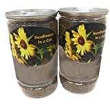 Sunflower in a Can - Desktop Or Indoor Garden Grow Flower in a Can Set (2 Pack)