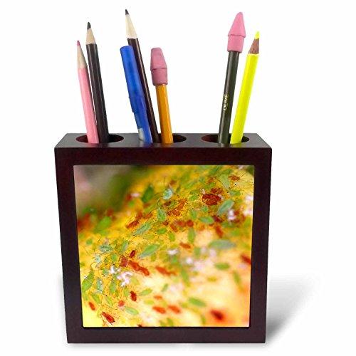 henrik-lehnerer-designs-animal-green-and-brown-aphids-infesting-a-rose-bush-5-inch-tile-pen-holder-p