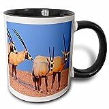 3dRose mug_133313_4 ''Arabian Oryx wildlife on Sir Bani Yas Island, UAE - AS44 MZW0004 - Martin Zwick'' Mug, 11 oz, Black
