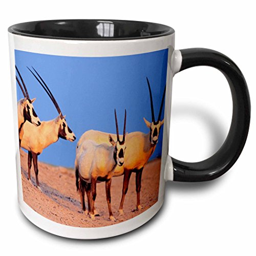 3dRose mug_133313_4 ''Arabian Oryx wildlife on Sir Bani Yas Island, UAE - AS44 MZW0004 - Martin Zwick'' Mug, 11 oz, Black by 3dRose
