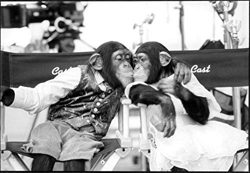 Kissing Monkey - 7