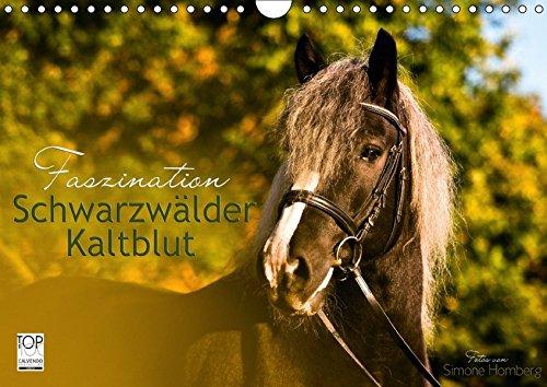 Faszination Schwarzwälder Kaltblut (Wandkalender 2018 DIN A4 quer): Kraftvoll, elegant und verspielt begleitet Sie das Schwarzwälder Kaltblut Pferd ... [Kalender] [Aug 24, 2015] HomSi-Fotos, k.A.