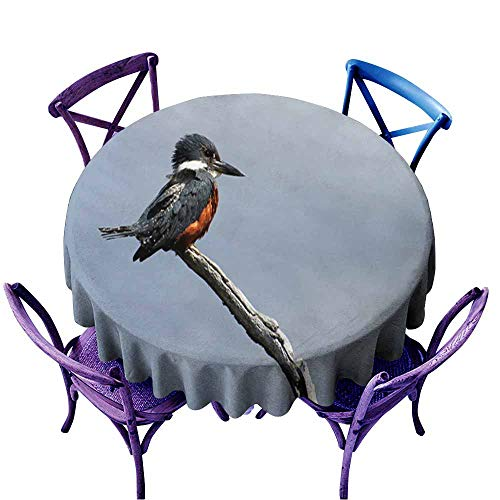 Acelik Spillproof Tablecloth,Beautiful Ringed Kingfisher megaceryle torquata on a Tree Branch Tierra Del Fuego Patagonia Argentina1,Modern Minimalist,60 INCH