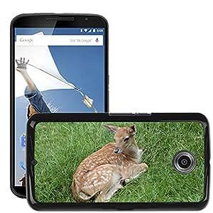 Hot Style Cell Phone PC Hard Case Cover // M00113379 Roe Deer Kid Wild Nature Hirsch // LG Google Nexus 6