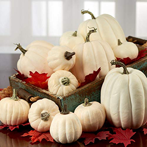 Factory Direct Craft Assorted Harvest White Pumpkins | 12 Pumpkins -