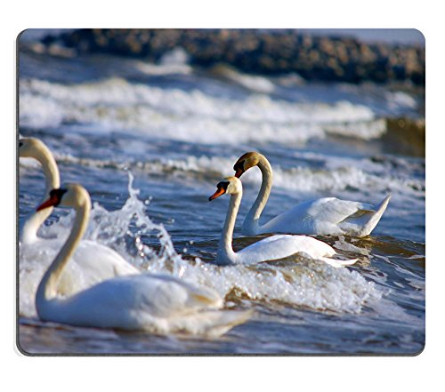 msd-natural-rubber-gaming-mousepad-swans-family-swimming-on-sea-image-1105548
