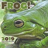 Frog! 2019 Calendar (UK Edition)