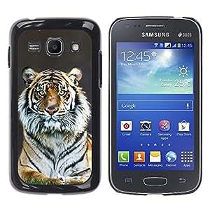 Stuss Case / Funda Carcasa protectora - Tiger Stripes Fur Grey Nature Animal Zoo - Samsung Galaxy Ace 3 GT-S7270 GT-S7275 GT-S7272