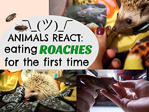 Animals React Eating Roaches For The First Time!