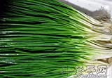 HOO PRODUCTS - Four Seasons scallions,chive - 500 seeds vegetable seeds for home plant Brand New !
