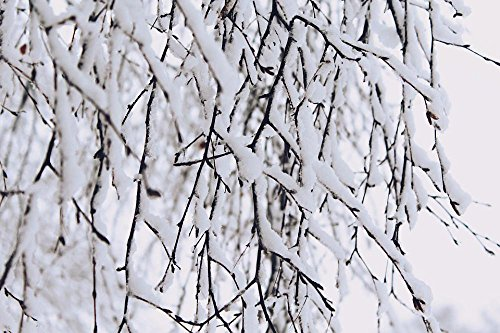 LAMINATED 36x24 Poster: Snow Branches Winter Nature Tree Cold Branch White Snowy Covered Branches Wintry Aesthetic Snow Magic Winter Dream Winter Magic Winter Mood Snowed In Winter Forest