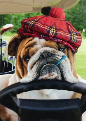 Bulldog Driving Golf Cart - Avanti Funny Dog Get Well Card (Cart Well)