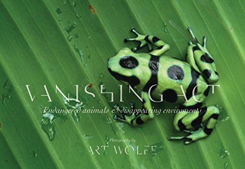 Vanishing Act: The Artistry of Animal Camouflage