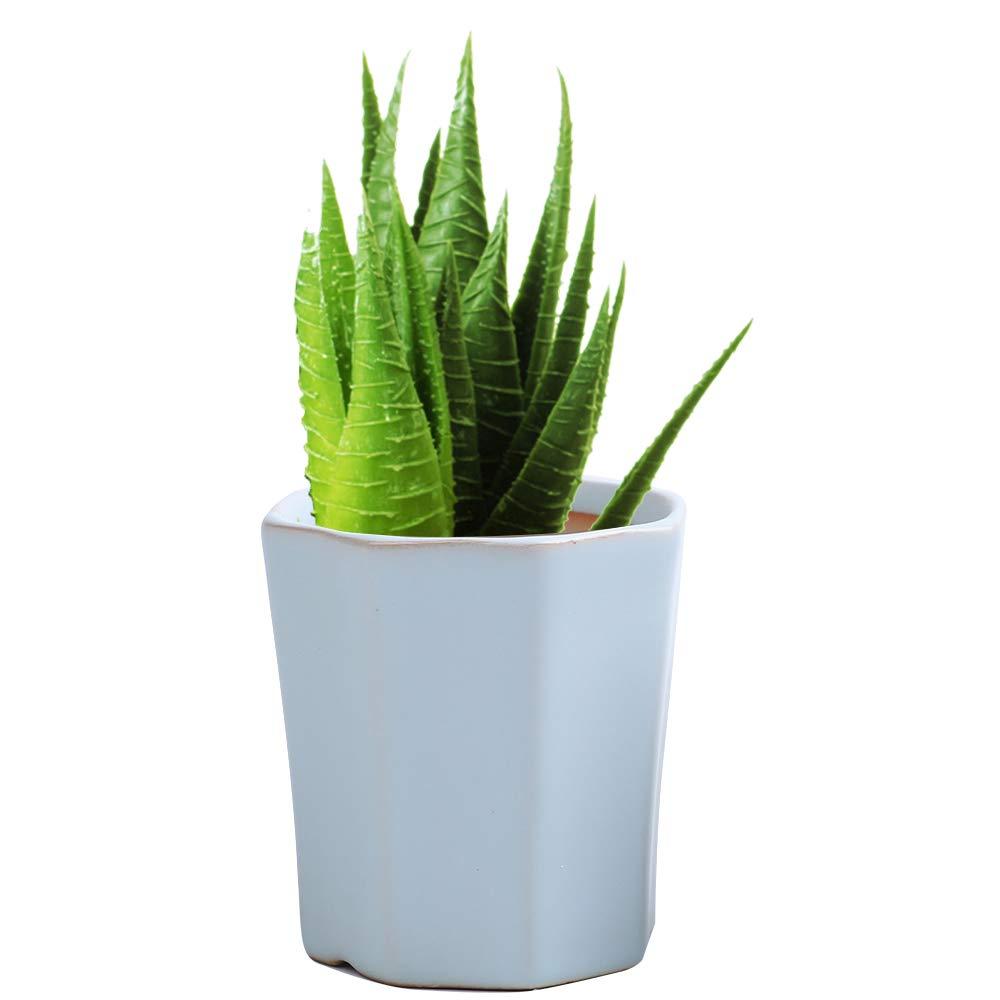 LUCKEGO - Maceta de cerámica con forma hexagonal para cactus ...