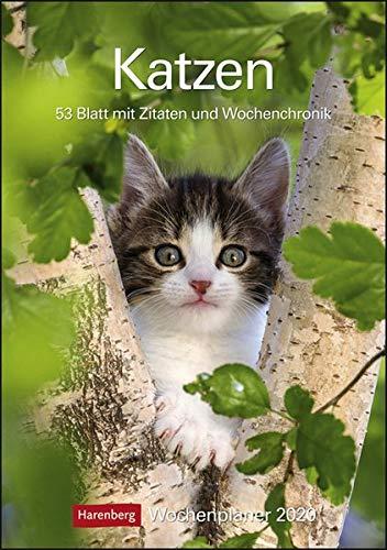 Katzen Wochenplaner. Wandkalender 2020. Wochenkalendarium. Spiralbindung. Format 25 X 355 Cm