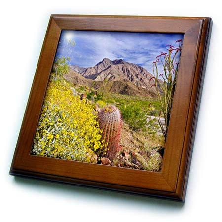 3dRose Danita Delimont - California - Barrel Cactus, Indianhead Peak, Anza-Borrego Desert, California, USA - 8x8 Framed Tile (ft_314704_1) ()