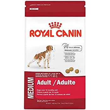 ROYAL CANIN SIZE HEALTH NUTRITION MEDIUM Adult dry dog food, 30-Pound
