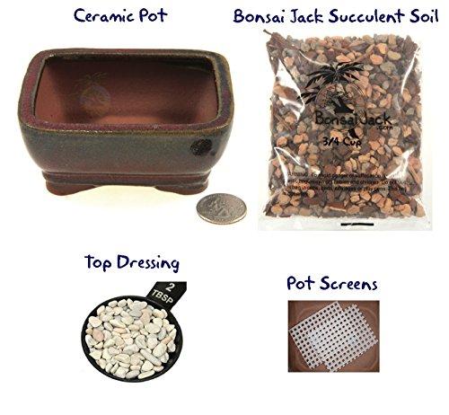 succulent-potting-kit4-inch-ceramic-bonsai-clay-pot-soil-screens-and-top-dressing-16-pot-colors