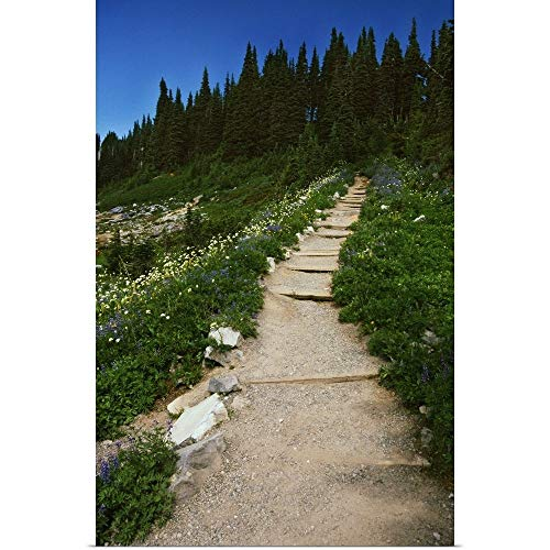 GREATBIGCANVAS Poster Print Entitled Trail Through Blooming Wildflower Meadow, Paradise Park, Mount Rainier National Park, Washington, United States, by 12