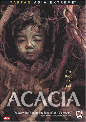 Acacia -