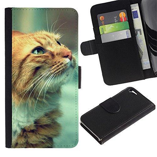 Be Good Phone Accessory // Caso del tirón Billetera de Cuero Titular de la tarjeta Carcasa Funda de Protección para Apple Iphone 5 / 5S // Cat Whiskers Ginger Red Yellow Face Orange