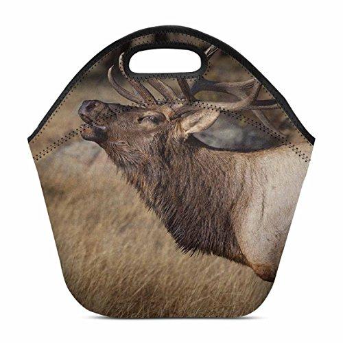 InterestPrint Deer Wilderness Elk in Rocky Mountain National Park Insulated Lunch Tote Bag Reusable Neoprene Portable Lunchbox Handbag Cooler for Men Women Adult Kids Boys Girls