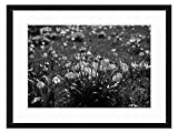 Wood Framed Canvas Artwork Home Decore Wall Art (Black White 20x14 inch) - Spring Knotenblume Snowflake Flowers Close Detail