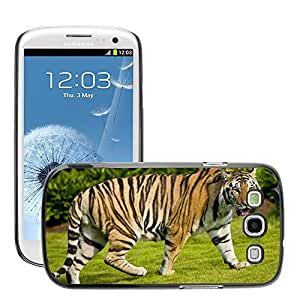 Hot Style Cell Phone PC Hard Case Cover // M00046052 wild zoo tiger animals // Samsung Galaxy S3 i9300
