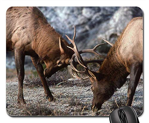 Mouse Pad - Bull Elk Sparring Wildlife Fighting Nature