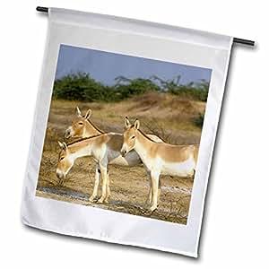 Danita Delimont - Wildlife - Asiatic Wild Ass, Donkey, Rann of Kutch. Gujarat, INDIA-AS10 POX0573 - Pete Oxford - 12 x 18 inch Garden Flag (fl_76278_1)