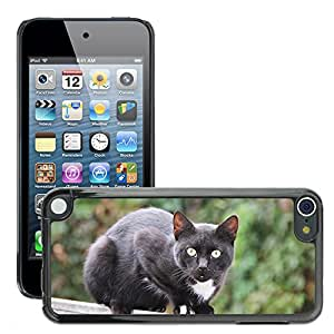 GoGoMobile Slim Protector Hard Shell Cover Case // M00118615 Cat Black Black Cat Pet Fence // Apple ipod Touch 5 5G 5th
