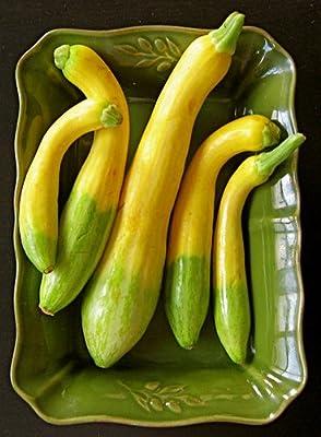 "(VSQSZ)~""ZEPHYR"" SUMMER SQUASH~Seeds!!~~~~~~New Variety!!"