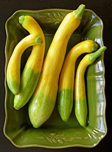 amazon com vsqsz zephyr summer squash seeds new variety
